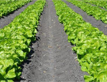 Especialistas em análises de solos agrícolas