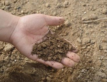 Caracterização nutricional do solo agrícola