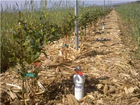 Seguimento e Controlo Nutricional, uma agricultura mais rentável