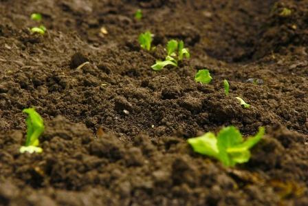 Análise de solos agrícolas