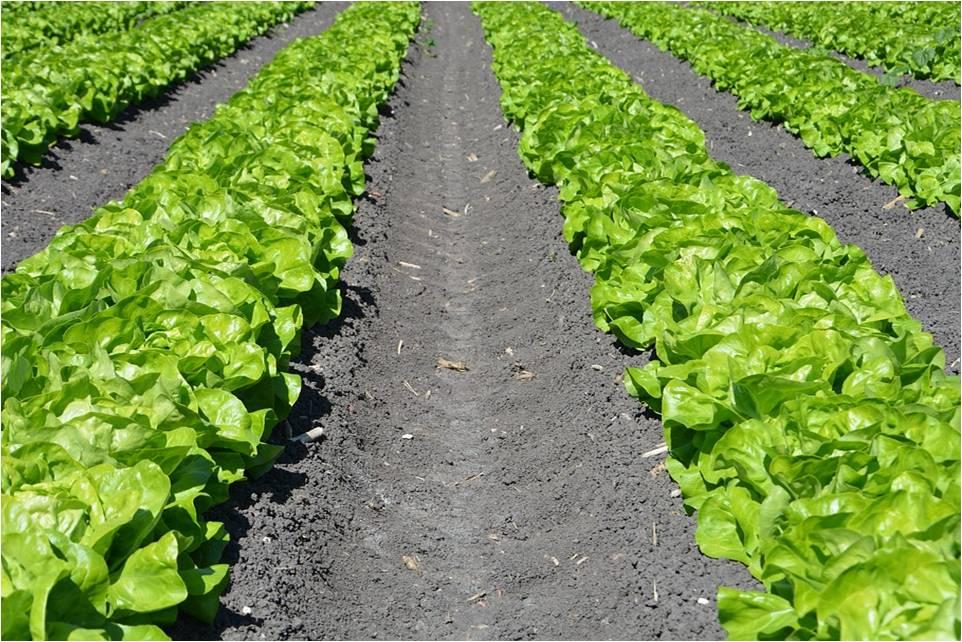 solos agricolas